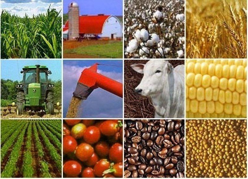 Agroindústria brasileira está em recessão, afirma a CNA